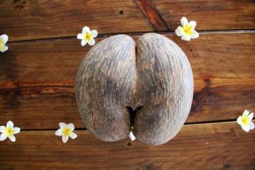 Seszele, czyli legenda o pewnym erotycznym kokosie